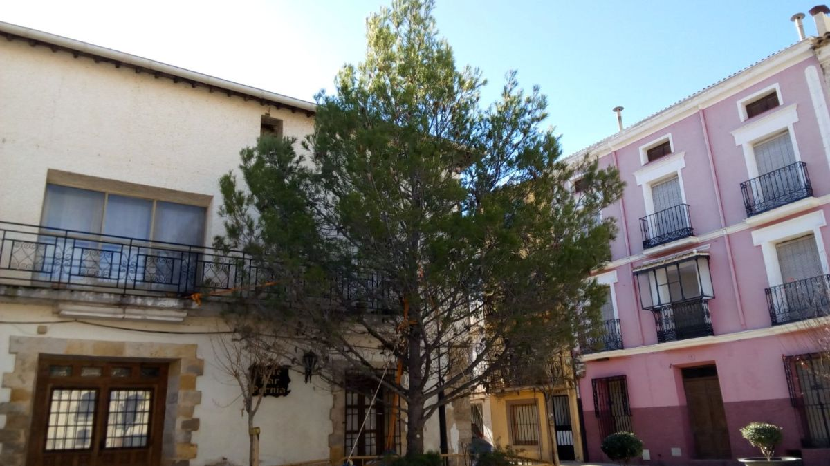Cinco asociaciones de Priego instalan un árbol de Navidad en La Plaza