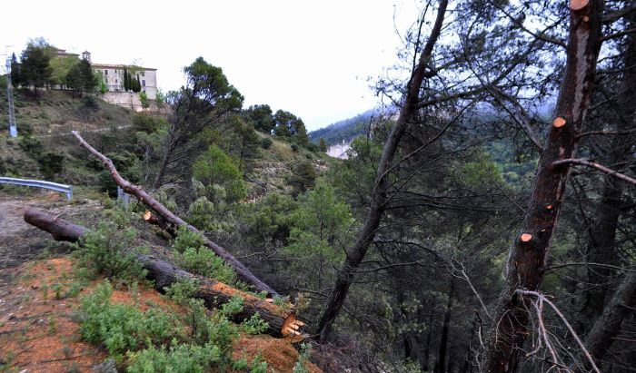 pinos convento tala